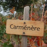 Carmenere vines Chile