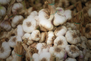 Photo of the Week: Garlic Bulbs at Market in Cesena, Italy