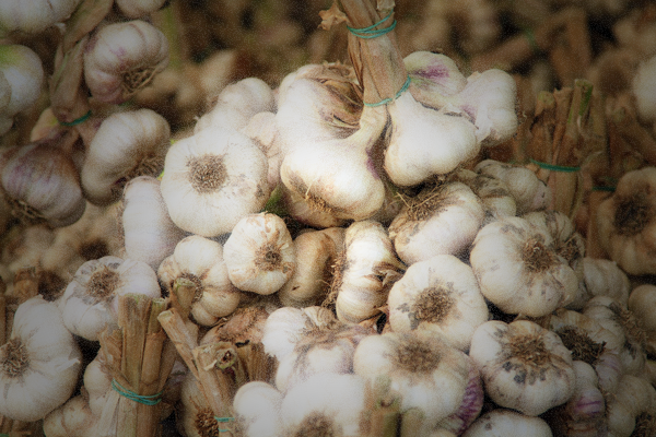Garlic bulbs for sale in Cesena, Italy http://ourtastytravels.com/blog/photo-garlic-bulbs-market-cesena-italy/ #ourtastytravels #blogville