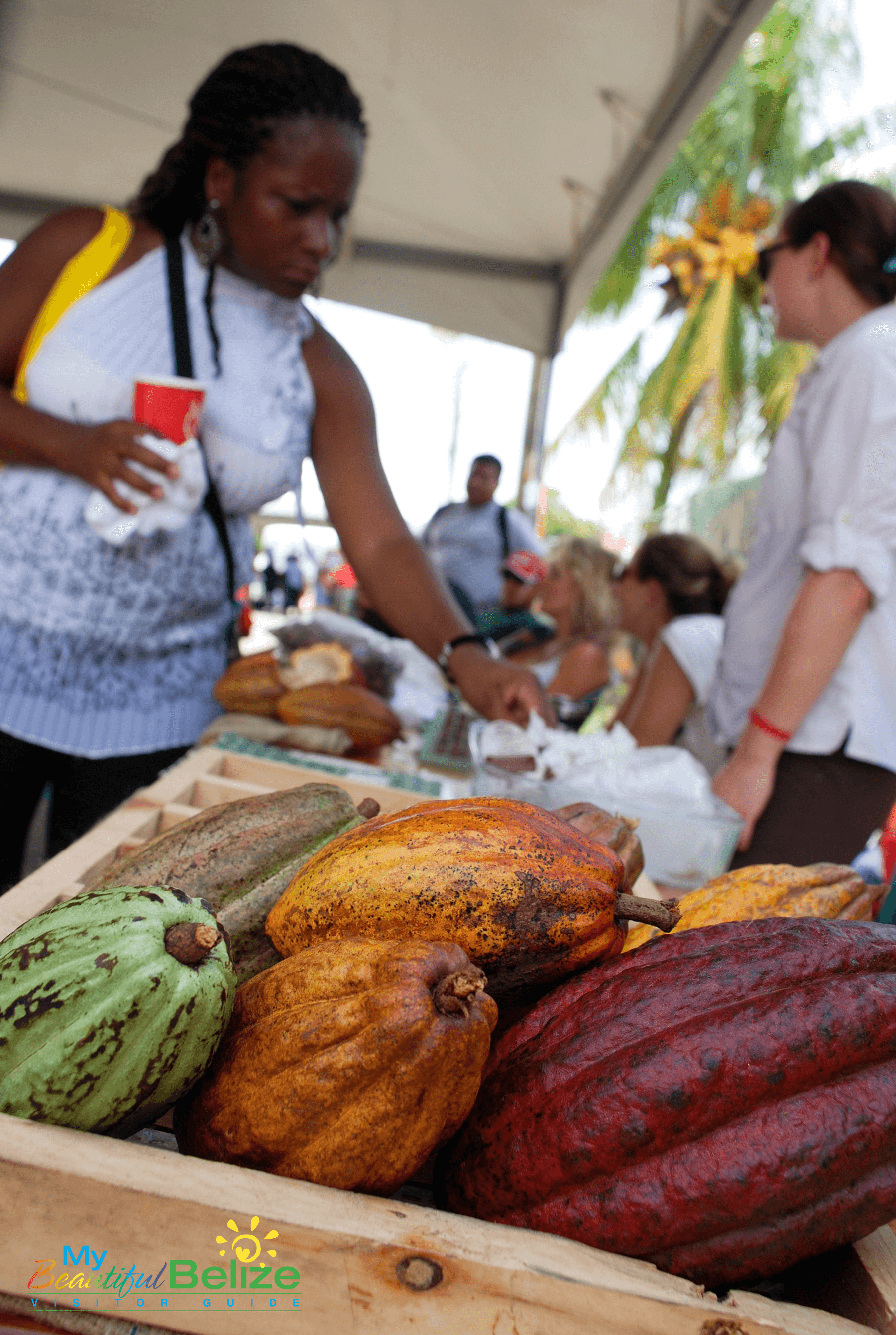 toledo cacao festival 2012 cacao fruit my beautiful belize